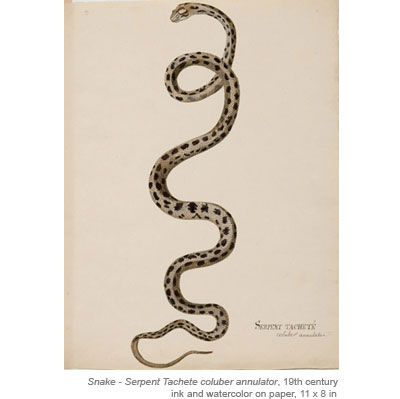 19th Century French Watercolors of Snakes